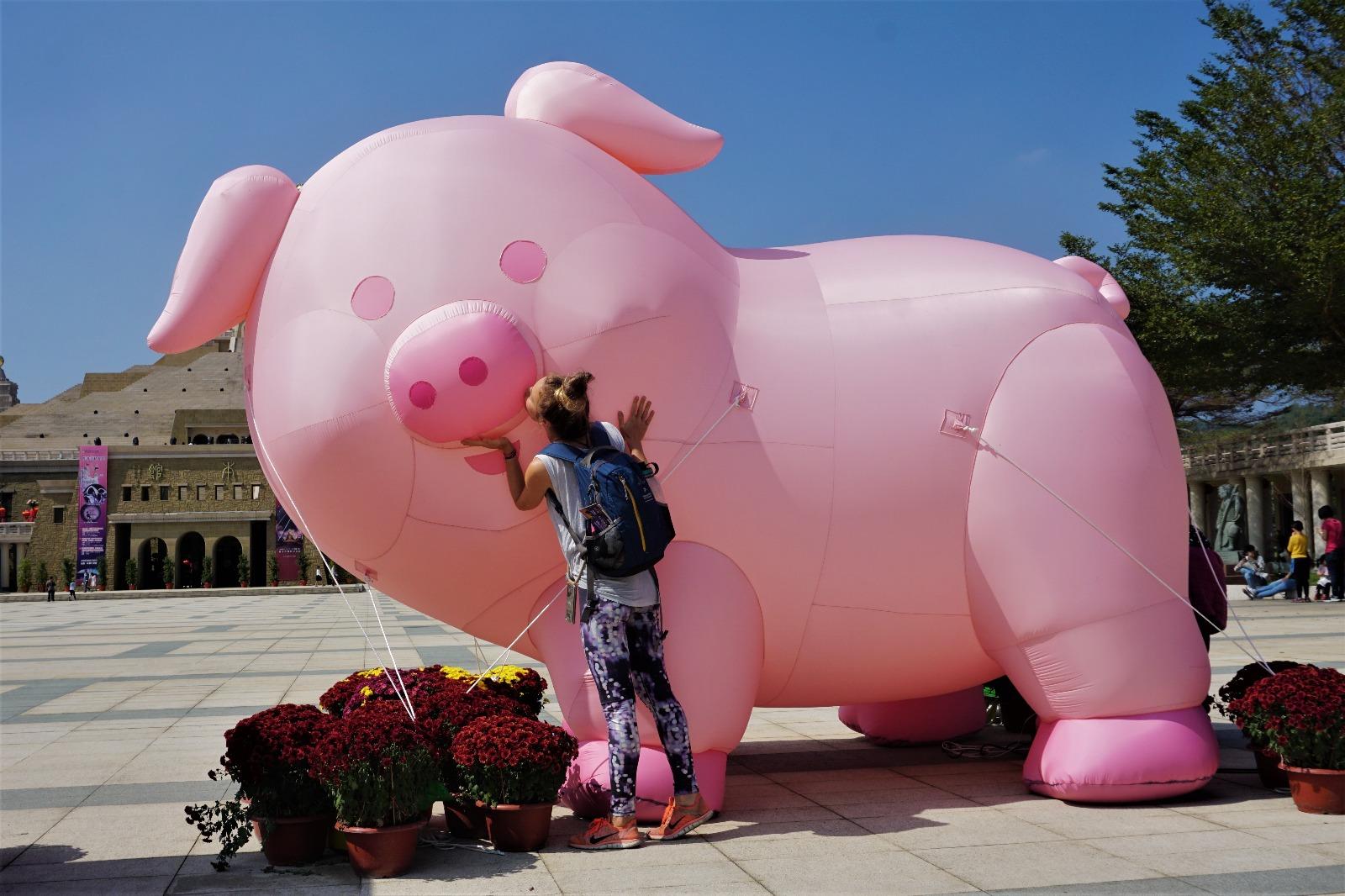 Ein Kuss für das Schwein-Maskotten im Buddha Museum