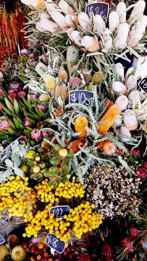 Australische Blumen am South Melbourne Market