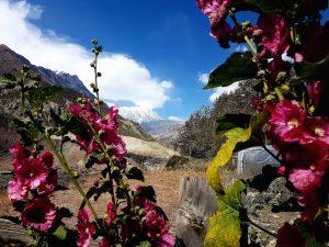 Blumen, schneebedeckte Berge und strahlend blauer Himmel