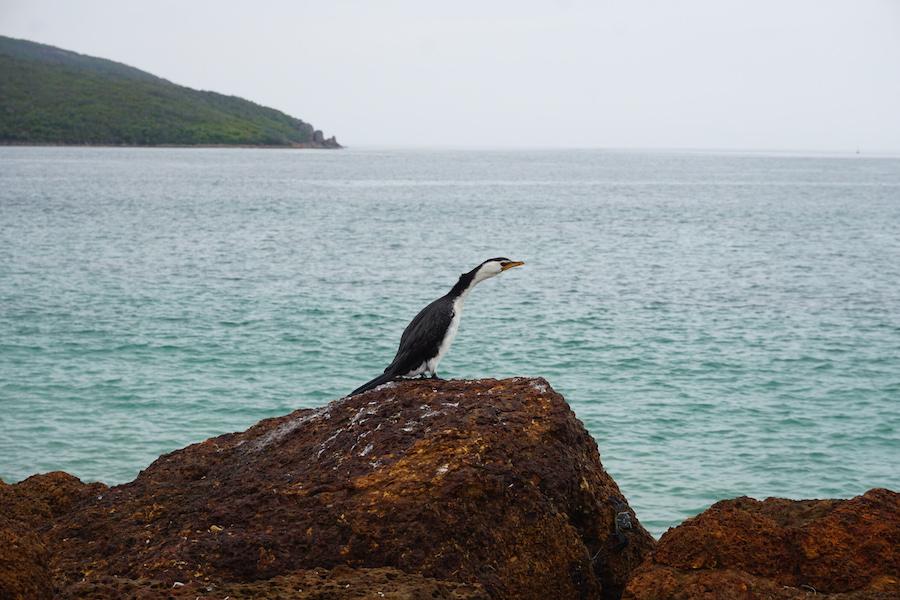 Meeresvogel am Felsen mit Blick aufs Meer