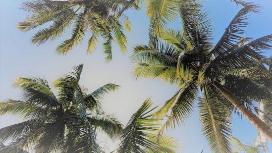 Palmen, Sonne und blauer Himmel auf den Philippinen