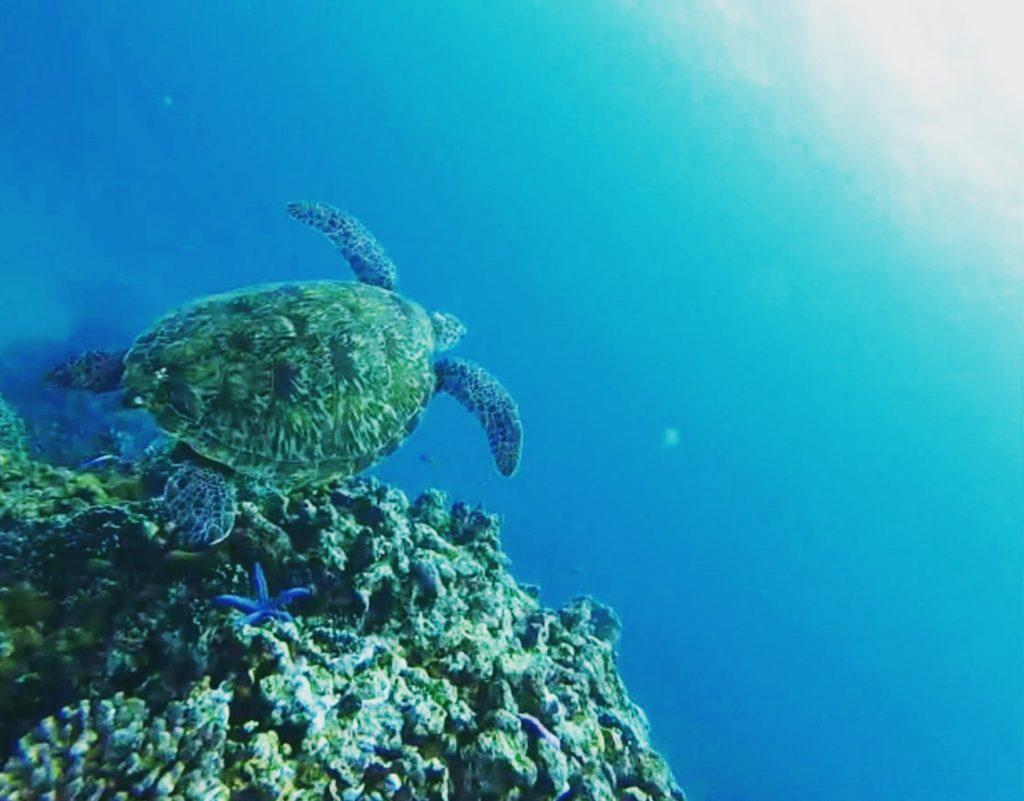 Schnorcheln mit einer Schildkröte bei Apo Island